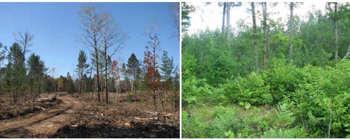 GWWA_Foresting