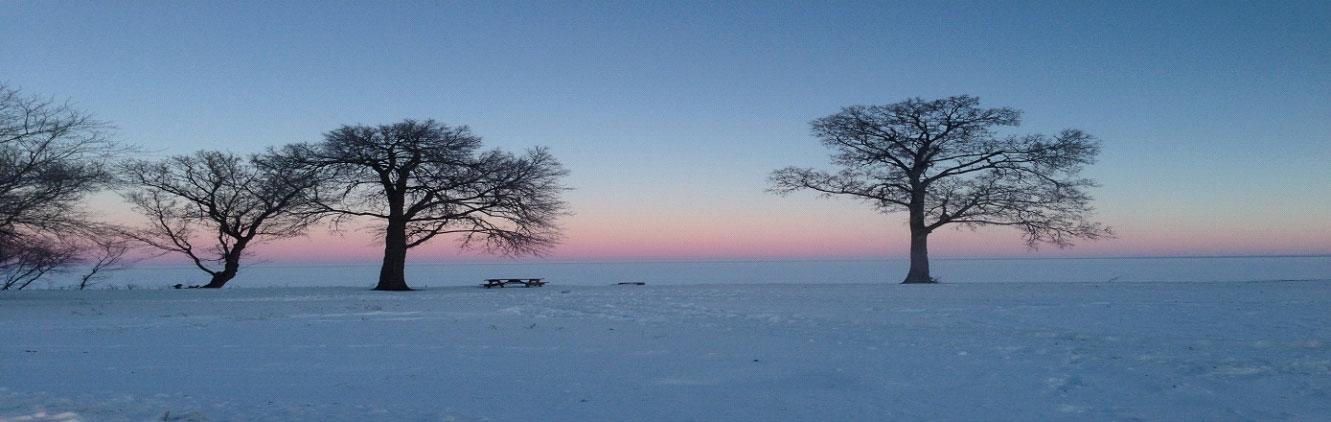 redlakednr-banner-environmental-winter-trees